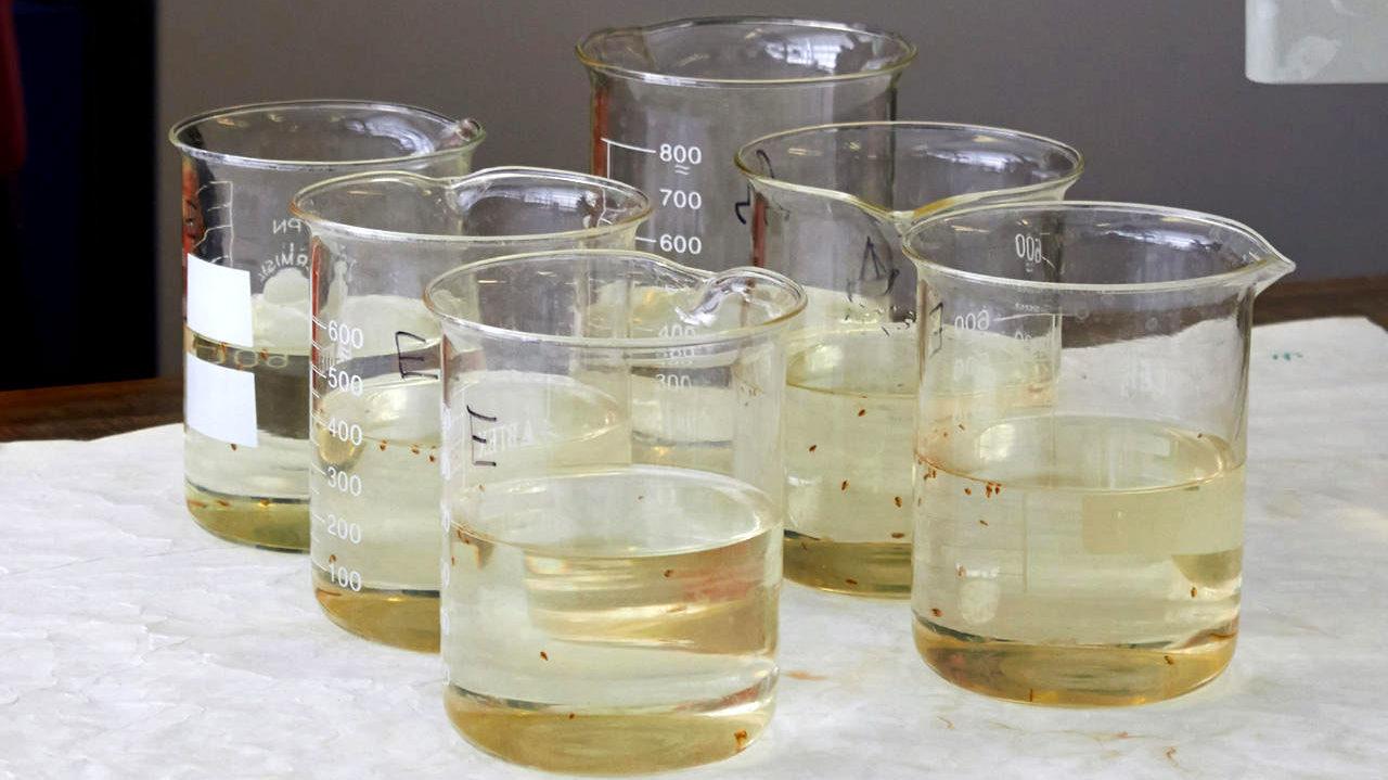 Процедура биотестирования