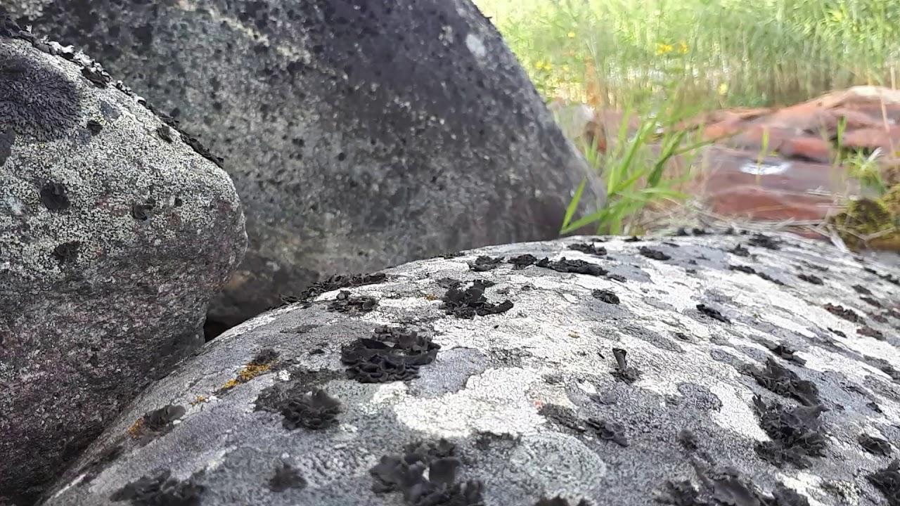 Биоиндикация воздуха по состоянию лишайников